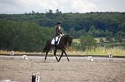 Hest til salg - CHEVALIER
