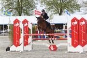 Hest til salg - FUNNY´S FANTASIA