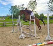 Hest til salg - LADY KRAKA