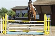 Hest til salg - LECOTO F