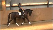 Hest til salg - SKIKKILD'S CARLOS