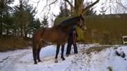 Hest til salg - NINE-TO-FIVE SØDOVERGÅRD