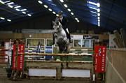Hest til salg - Camelot DVH 984