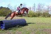 Hest til salg - Credenza