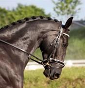 Hest til salg - DIAMOND ROYAL