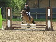 Hest til salg - KONGSGAARDS BAILEY