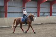 Hest til salg - Mzart