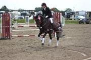 Hest til salg - PRINSEN BOJI