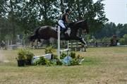 Hest til salg - Lodge Park Rapadash