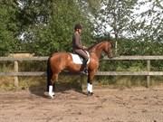 Hest til salg - MRS. MARBLE