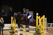 Hest til salg - HEDEGÅRDENS IBRAHIM