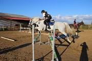 Hest til salg - DOONEENS GOLD SEEKER