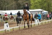 Hest til salg - Anemone