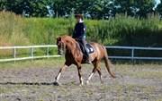 Hest til salg - DIVINA