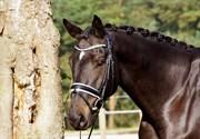 Hest til salg - PETACCHI