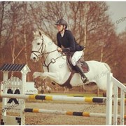 Hest til salg - KILTALE DIRTY HARRY