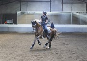 Hest til salg - BAILANDO