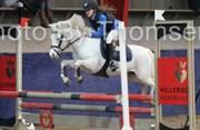 Hest til salg - RÆVHALEGÅRDS SNOWSTAR