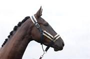 Hest til salg - NELLA KJELLERUP