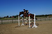 Hest til salg - STILETTEN