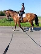 Hest til salg - KILDEVANGS LA PIRULO