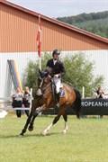 Hest til salg - CP COME ON CARMARC