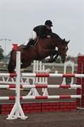 Hest til salg - CLARETTA 2