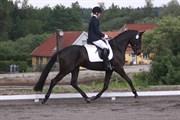 Hest til salg - DIECELLE MAX