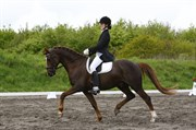 Hest til salg - AGERHOLM´S MON AMI