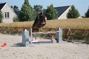 Hest til salg - BAUNEHØJENS VERDI