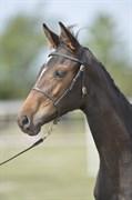 Hest til salg - DROSTGAARD'S DIMA