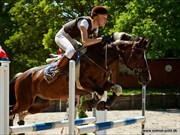 Hest til salg - TIPI