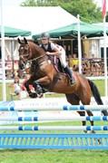 Hest til salg - TATUM