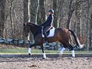 Hest til salg - GREVENS ZUK