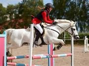 Hest til salg - BANKS CAPTAIN