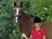 Hest til salg - VESTERDAMS SELENE