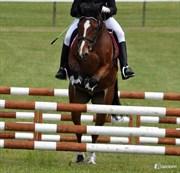 Hest til salg - BAKKELY´S ROZITTA