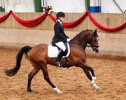 Hest til salg - TOFTEGÅRDENS ALCAZAR