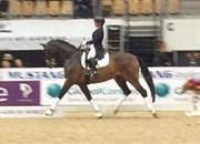 Hest til salg - GRIBONDI