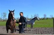 Hest til salg - DONNA - Ø
