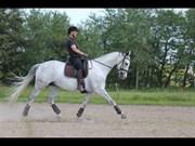 Hest til salg - MONTY PYTHON