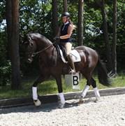 Hest til salg - SPRINGBORGS DUNKELBALL