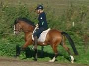 Hest til salg - ANN BETH