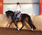 Hest til salg - KORSGÅRDS TERRY