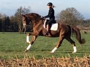 Hest til salg - Rafael