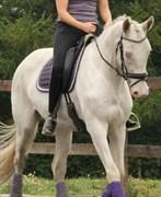 Hest til salg - Tanholms White Diamond