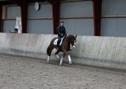 Hest til salg - RIPASSO