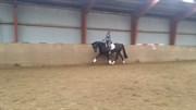Hest til salg - HAVEGAARDENS RAPSODY