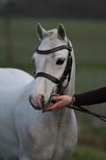 Hest til salg - FLIYNG MR. GRAY