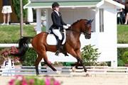 Hest til salg - Beukenhofs Ricardo